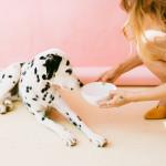 犬ご飯の分量
