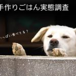 犬の手作りごはん実態調査2015
