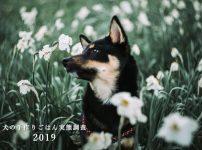 犬の手作りごはん実態調査2019