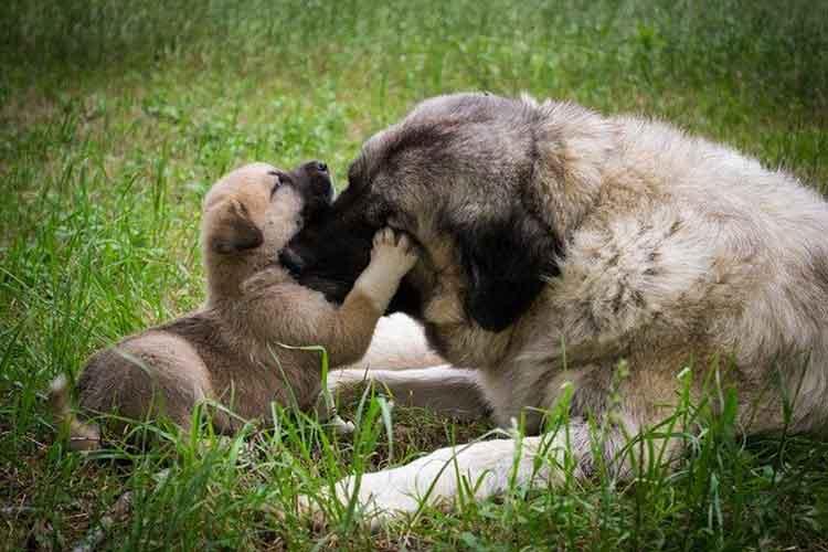 子犬と母犬